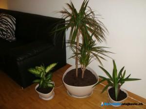 Final look - Plants